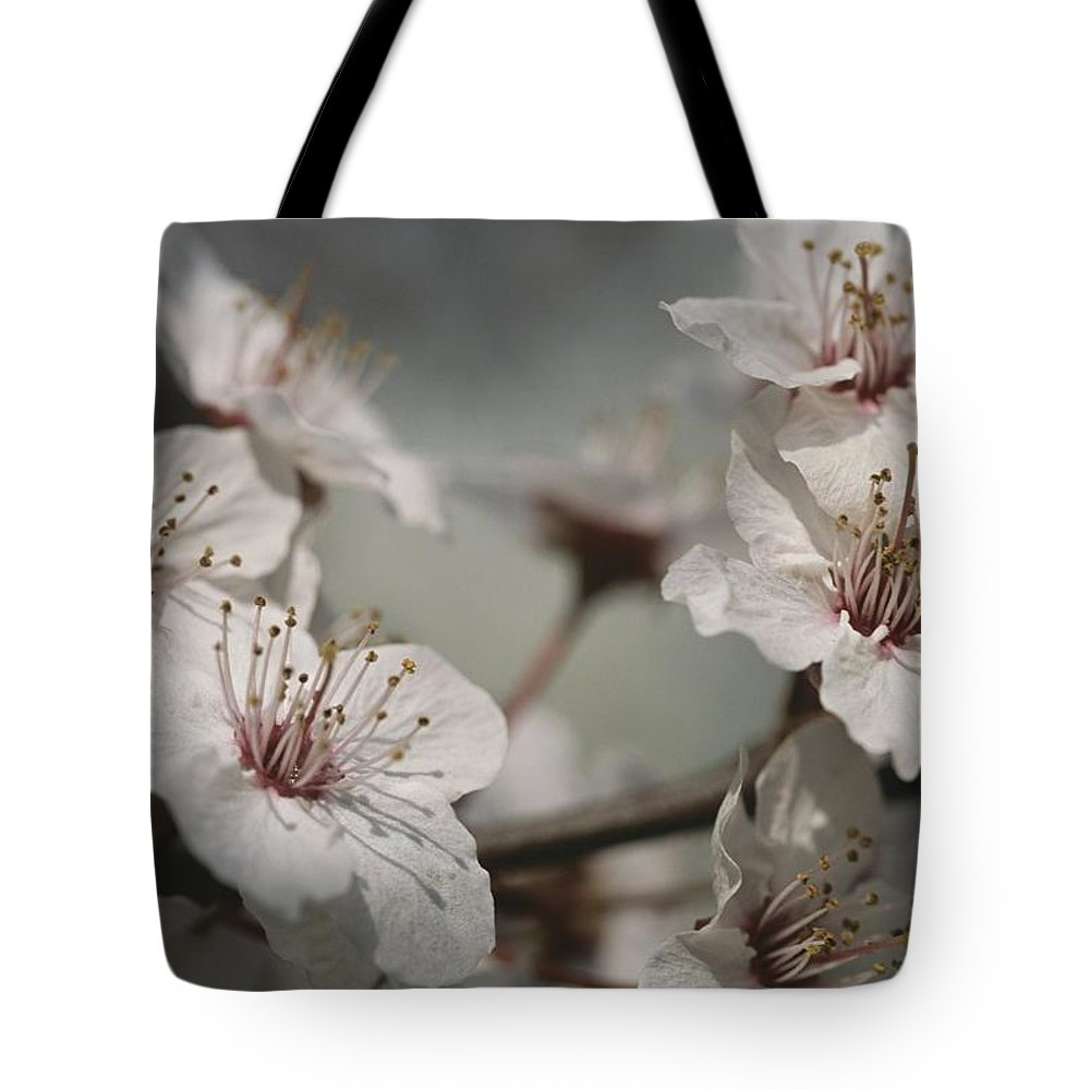 Plant Physiology Tote Bag featuring the photograph Close View Of Cherry Blossoms by Darlyne A. Murawski