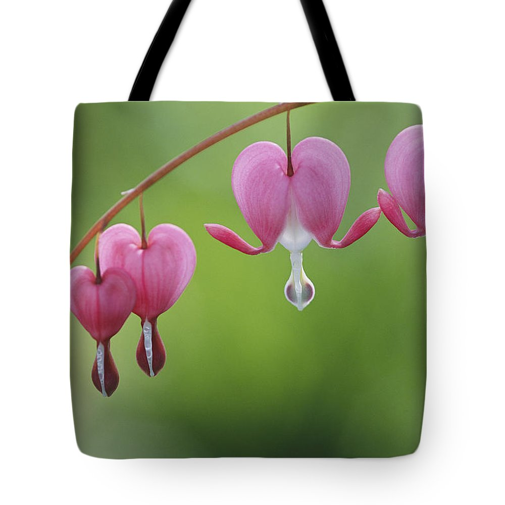 Plants Tote Bag featuring the photograph Close View Of Dutchmans Breeches, Or by Darlyne A. Murawski
