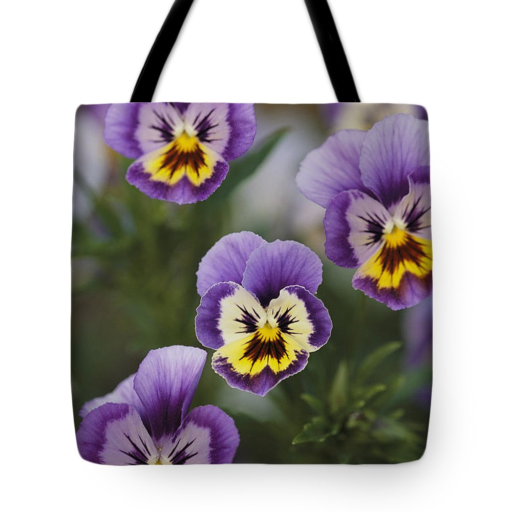 Plants Tote Bag featuring the photograph Close View Of Pansy Blossoms by Darlyne A. Murawski