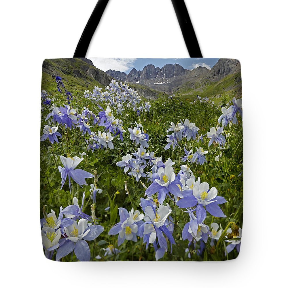 Colorado blue columbine flowers tote bag for sale by tim fitzharris 00438895 tote bag featuring the photograph colorado blue columbine flowers by tim fitzharris izmirmasajfo Gallery