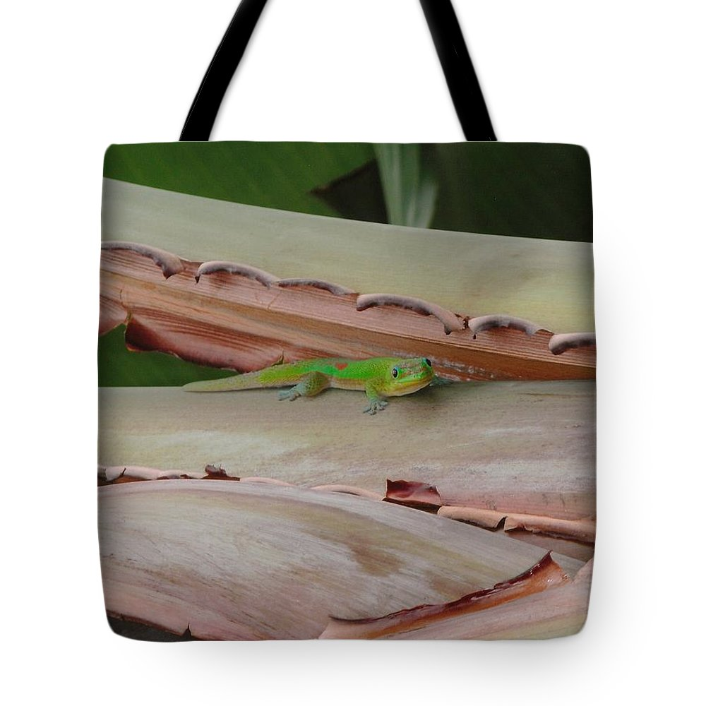 Elaine Haakenson Tote Bag featuring the photograph Curious Gecko by Elaine Haakenson