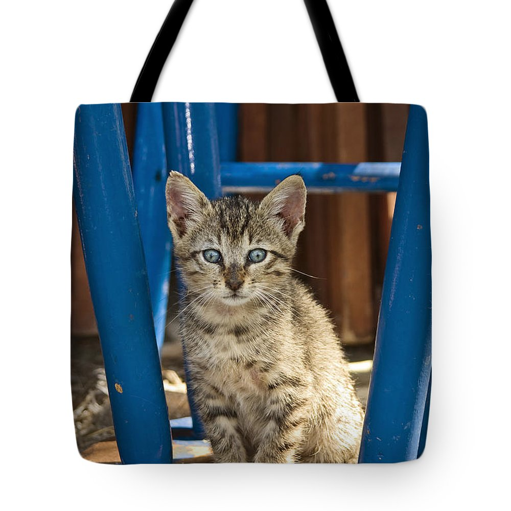 Mp Tote Bag featuring the photograph Domestic Cat Felis Catus Kitten, Germany by Konrad Wothe