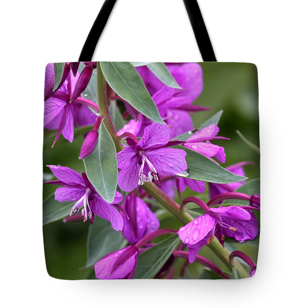 Doug Lloyd Tote Bag featuring the photograph Dwarf Fireweed by Doug Lloyd
