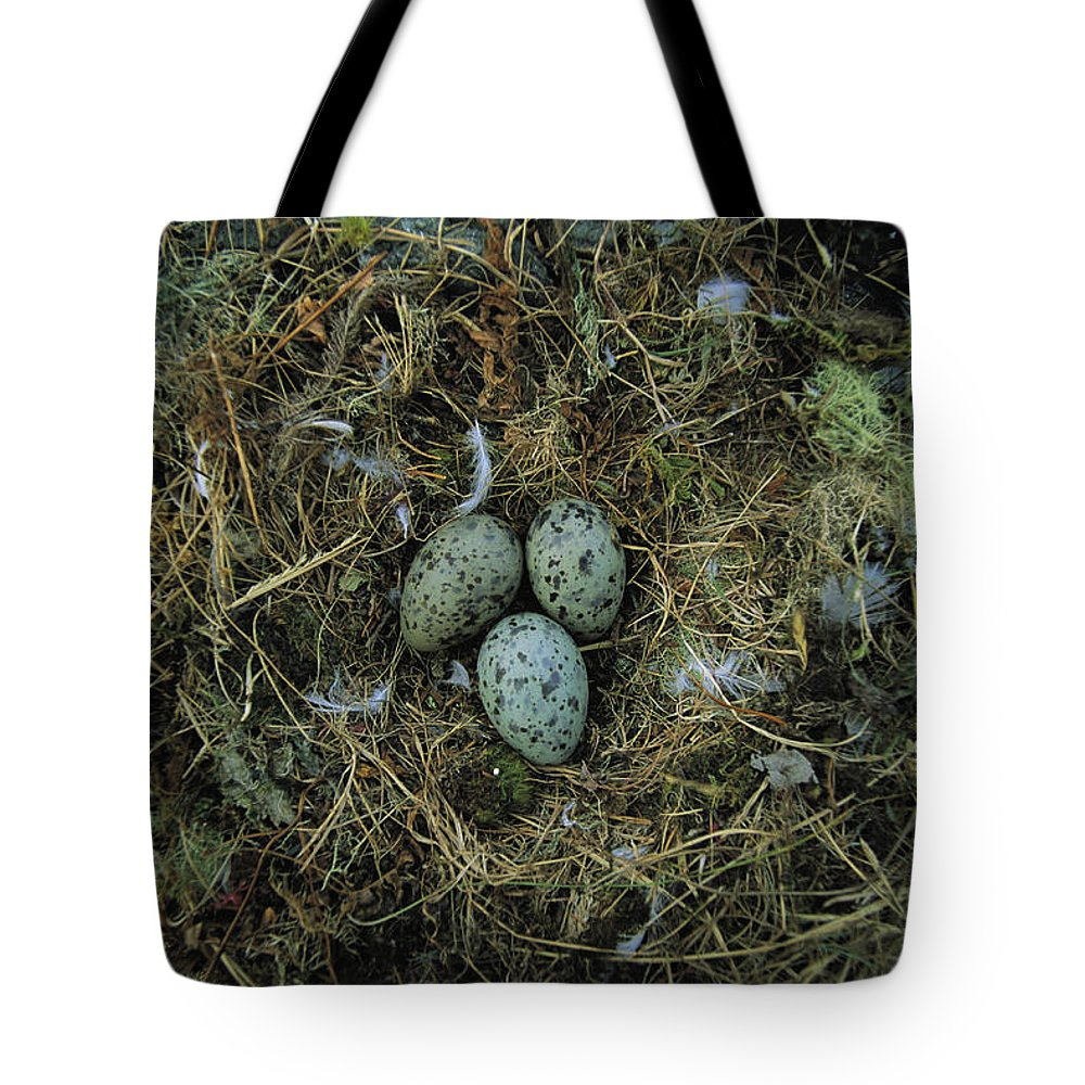 North America Tote Bag featuring the photograph Glaucous-winged Gull Nest With Three by Joel Sartore