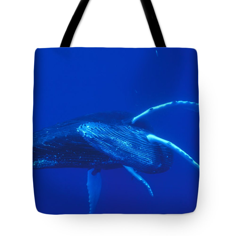 00114527 Tote Bag featuring the photograph Humpback Whale Mother And Calf Off Maui by Flip Nicklin