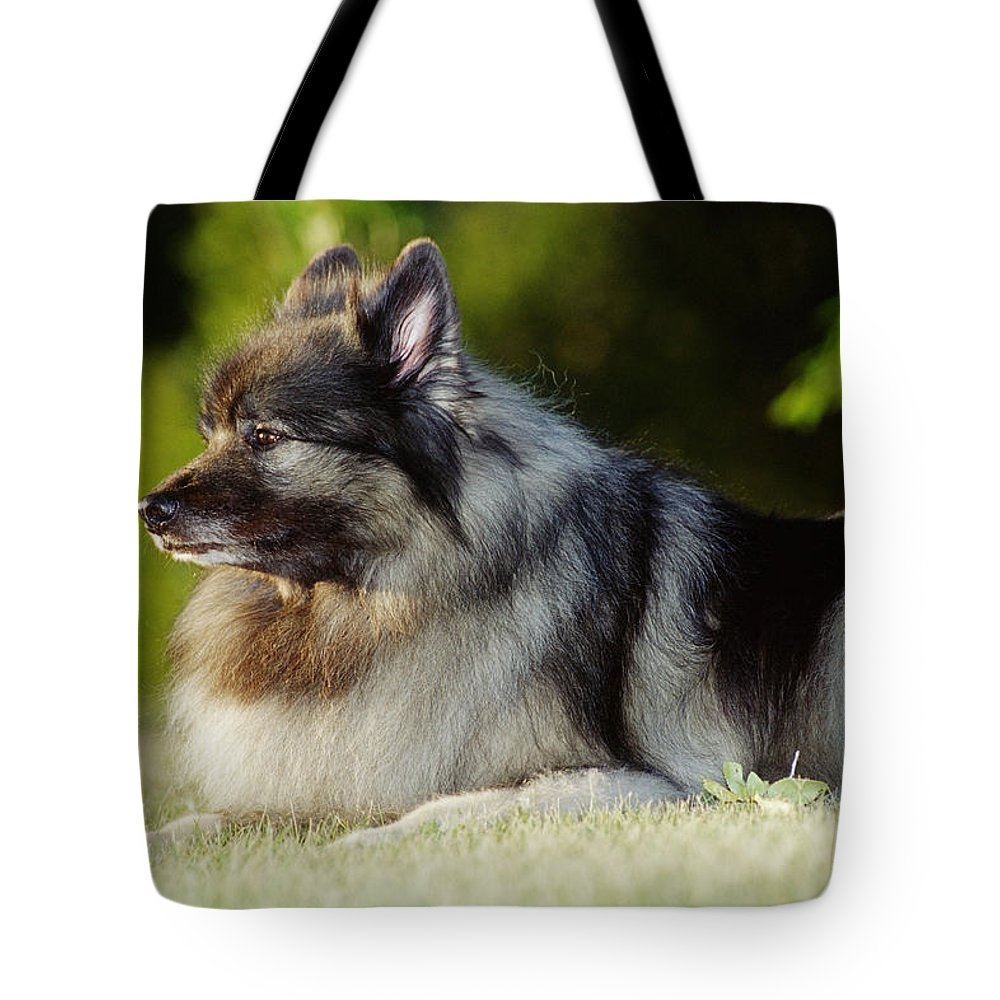 Color Images Tote Bag featuring the photograph Keeshond Dog, Winnipeg, Manitoba by Mike Grandmailson