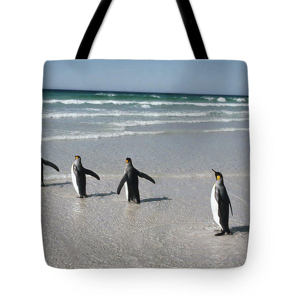 Aptenodytes Patagonicus Tote Bag featuring the photograph King Penguin Aptenodytes Patagonicus by Tui De Roy