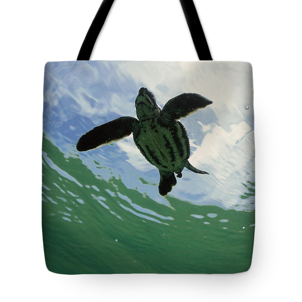 Mp Tote Bag featuring the photograph Leatherback Sea Turtle Dermochelys by Mike Parry