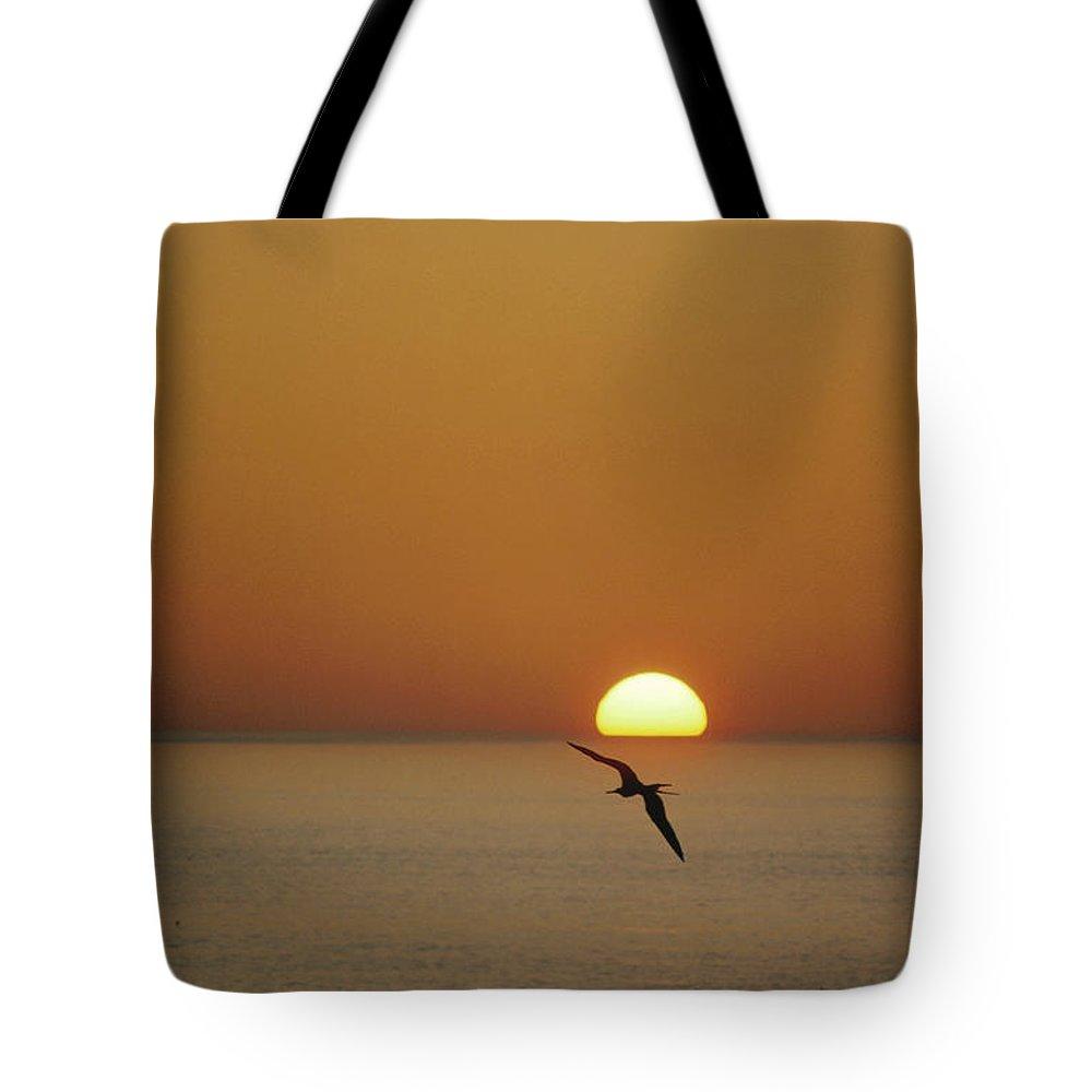 Color Image Tote Bag featuring the photograph Magnificent Frigatebird Fregata by Tui De Roy