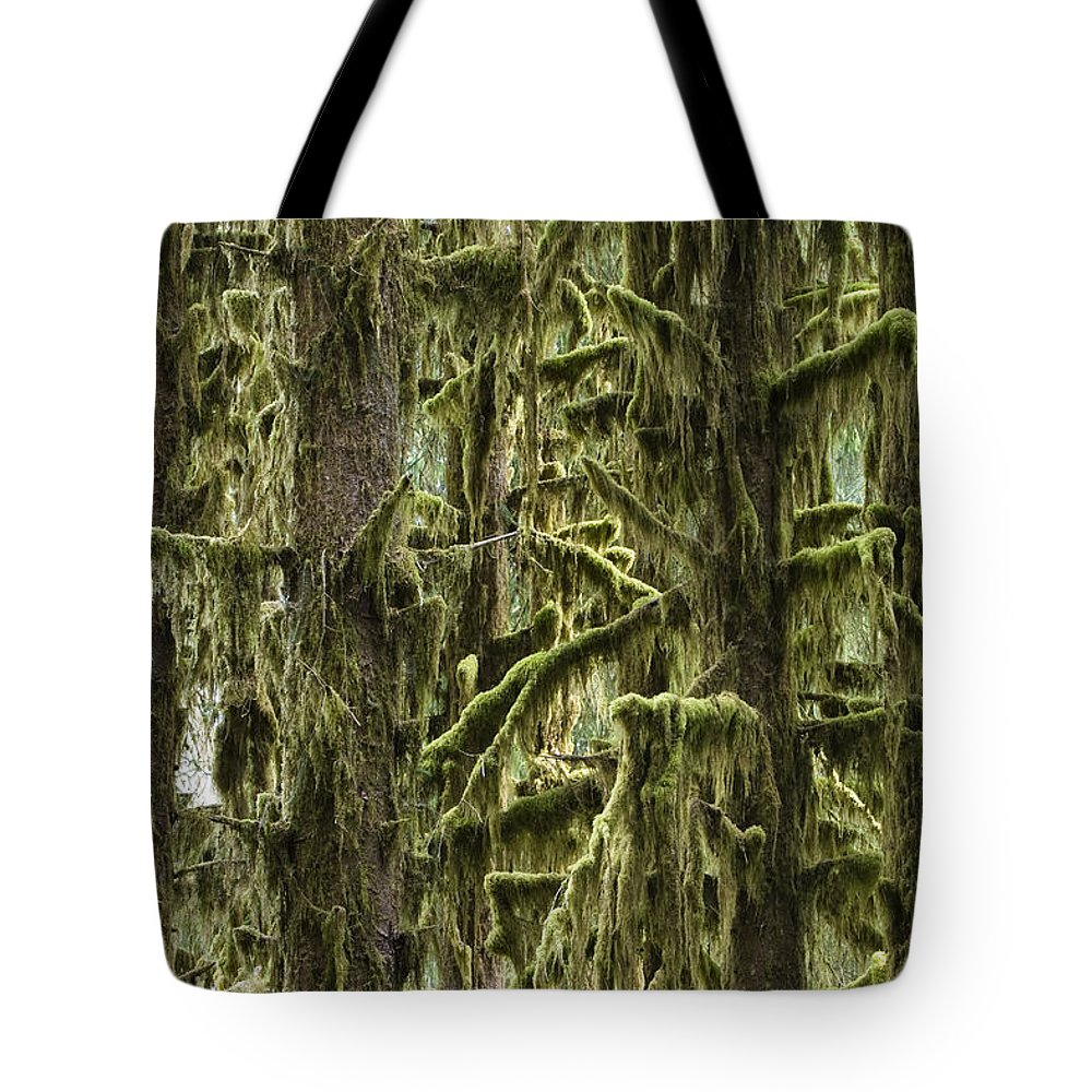 Mp Tote Bag featuring the photograph Moss Covered Trees, Hoh Rainforest by Konrad Wothe