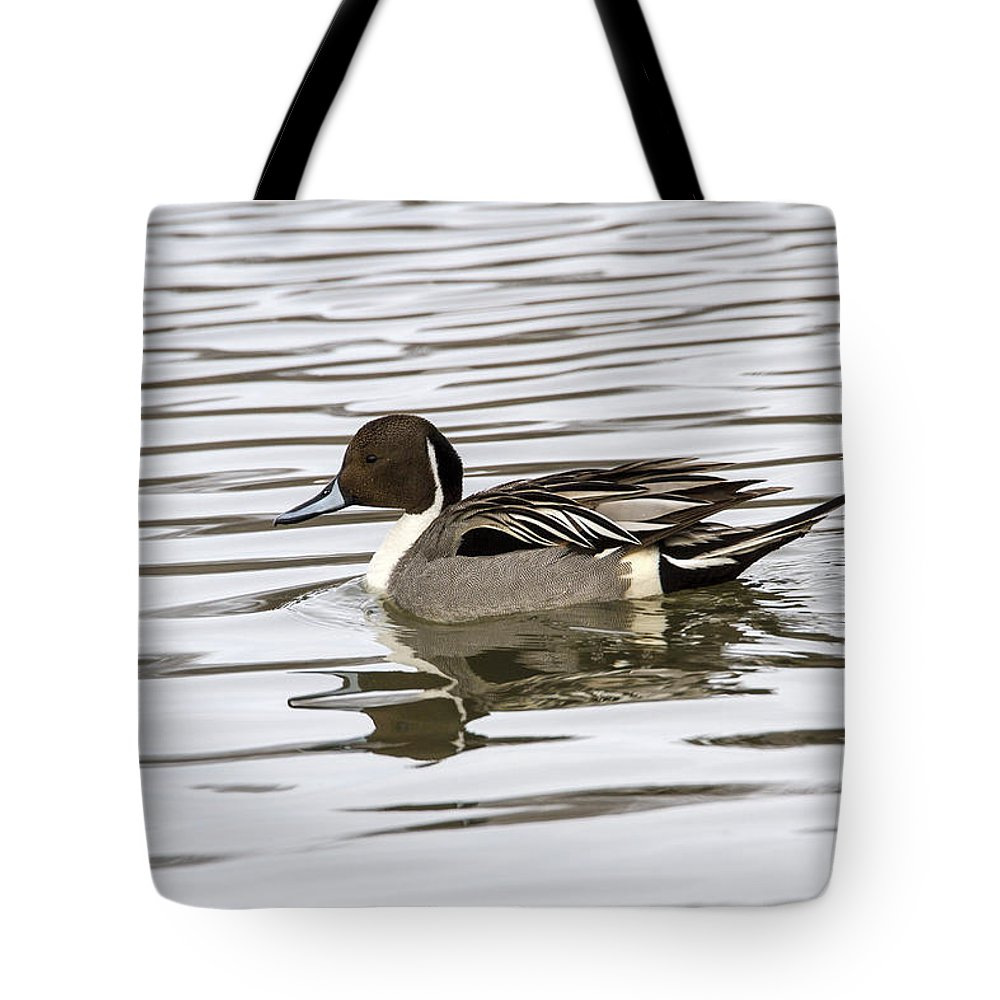 Doug Lloyd Tote Bag featuring the photograph Northern Pintail by Doug Lloyd