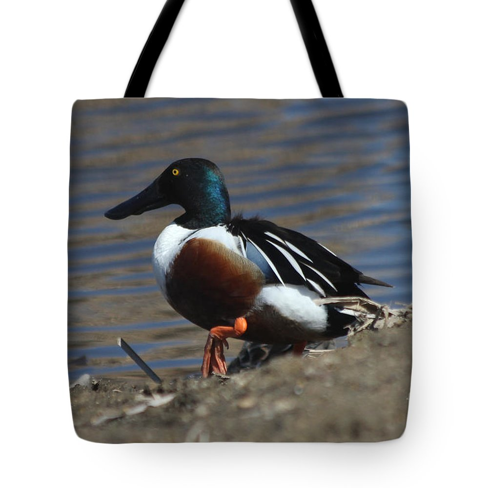 Duck Tote Bag featuring the photograph Northern Shoveler by Lori Tordsen