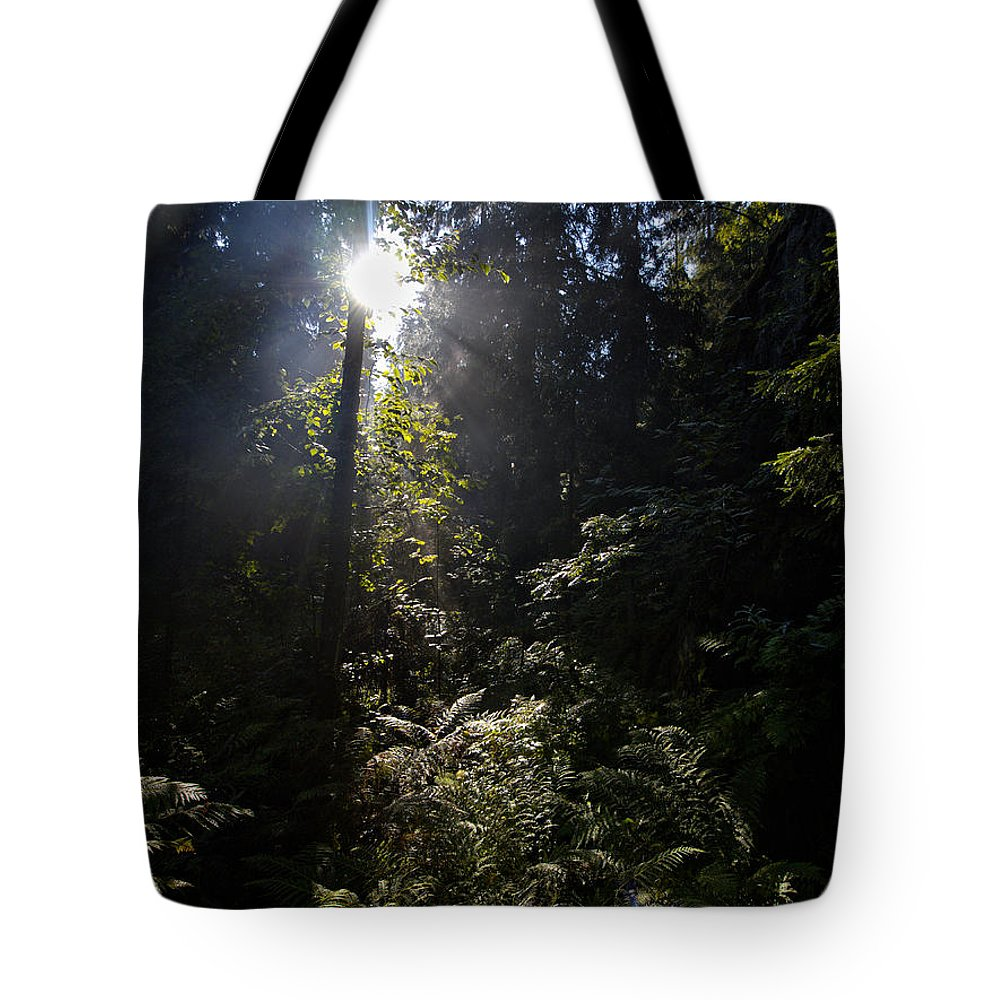Finland Tote Bag featuring the photograph Old Forests At Evo by Jouko Lehto