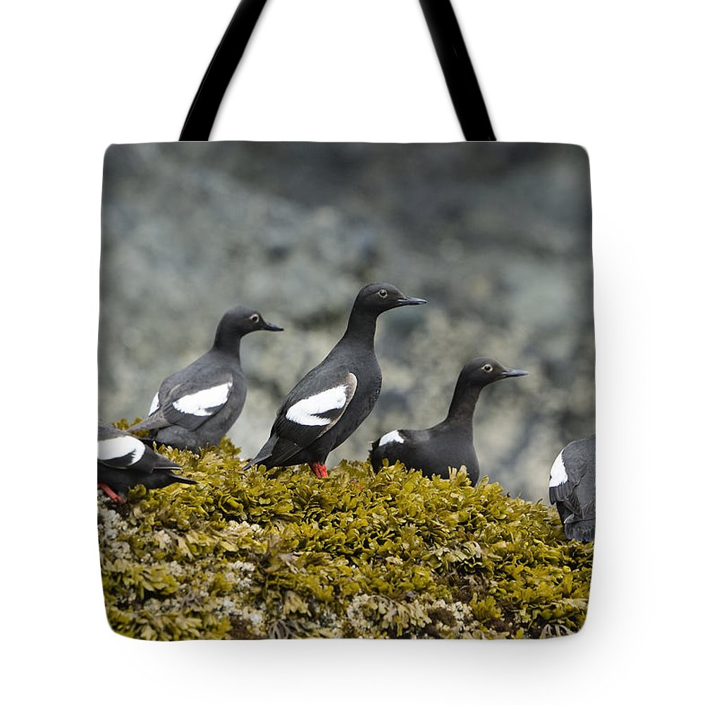Mp Tote Bag featuring the photograph Pigeon Guillemot Cepphus Columba Group by Konrad Wothe