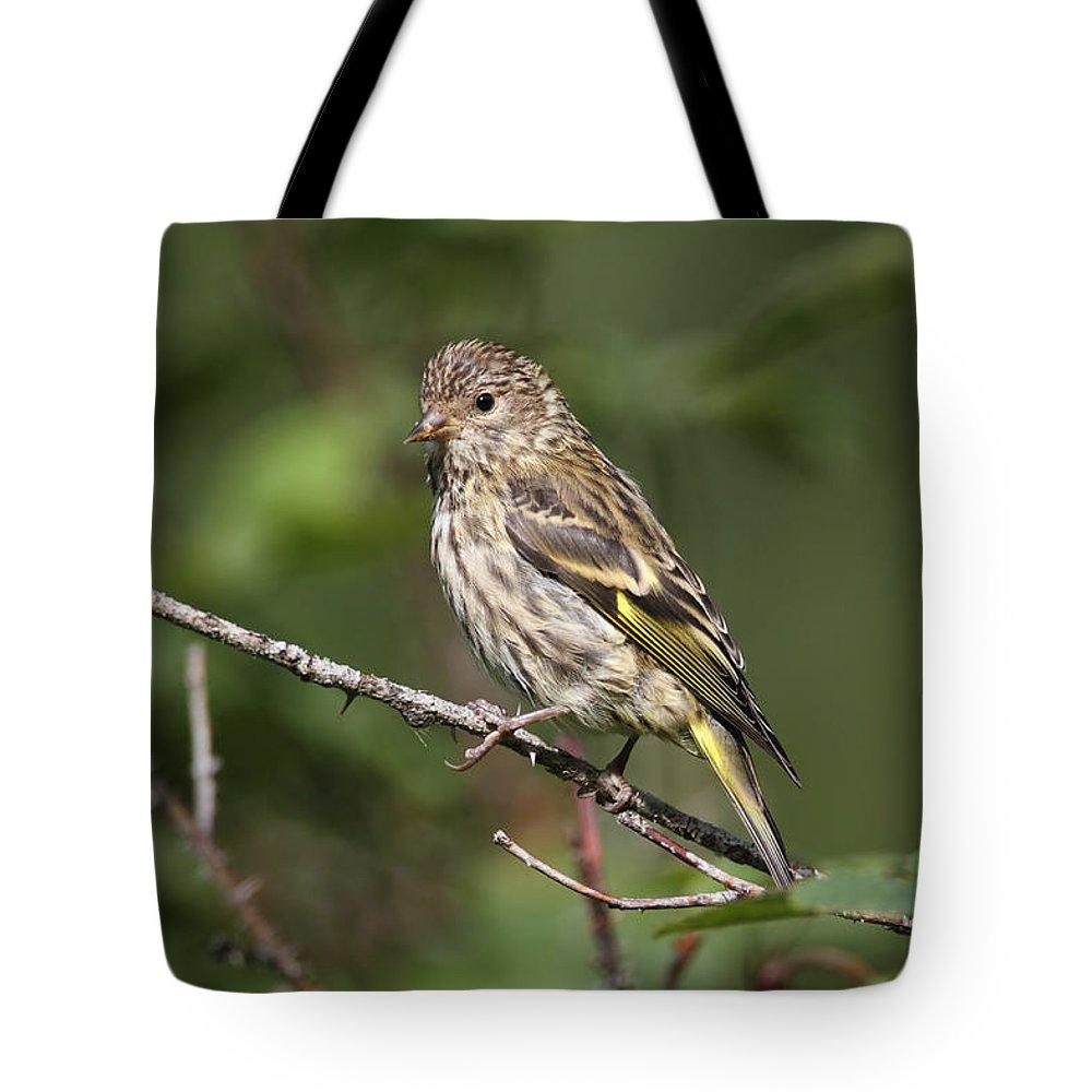 Doug Lloyd Tote Bag featuring the photograph Pine Siskin by Doug Lloyd