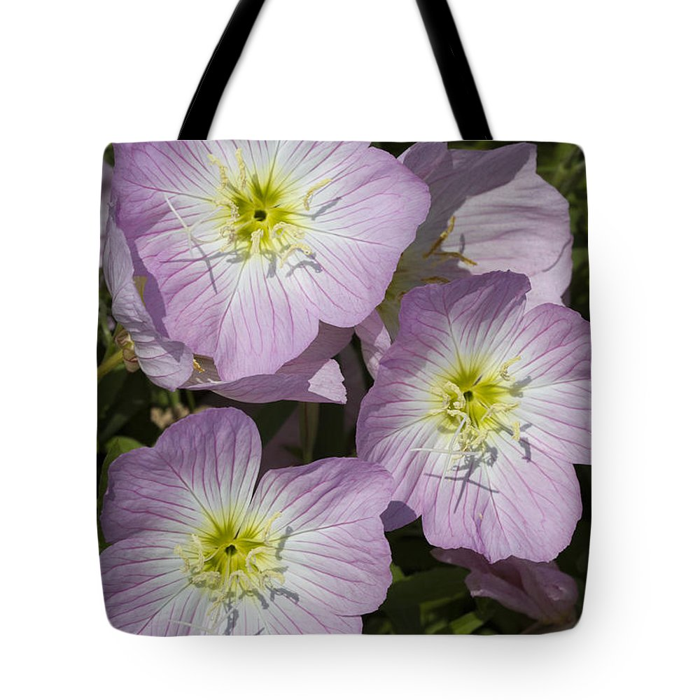 Oenothera Speciosa Tote Bag featuring the photograph Pink Evening Primrose Wildflowers by Kathy Clark