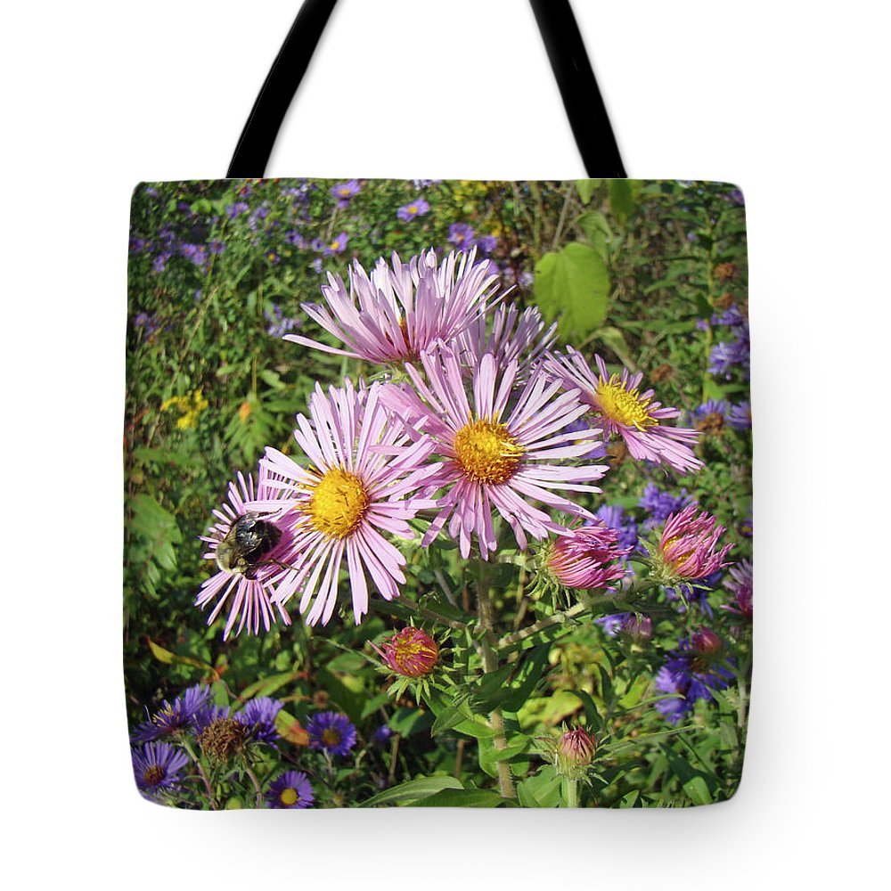 Aster Tote Bag featuring the photograph Pink New York Aster- Symphyotrichum Novi-belgii by Mother Nature