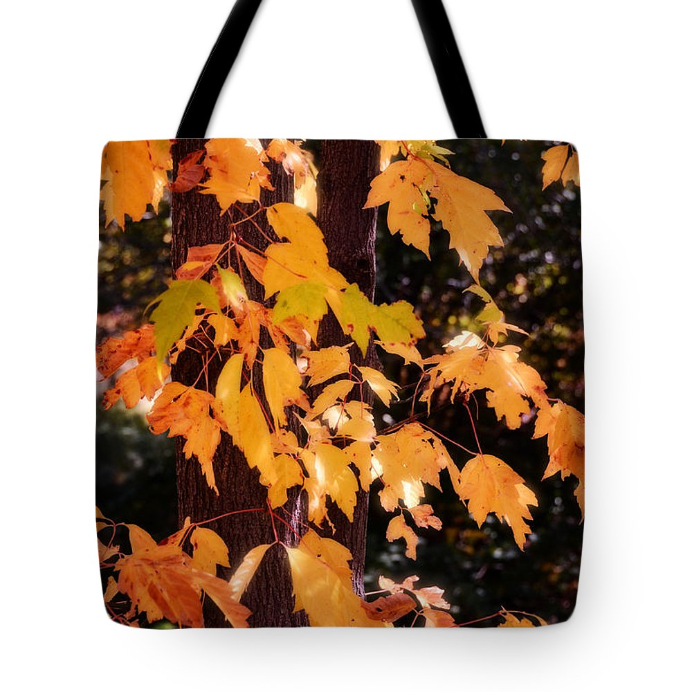 Autumn Tote Bag featuring the photograph Pure Gold by Saija Lehtonen