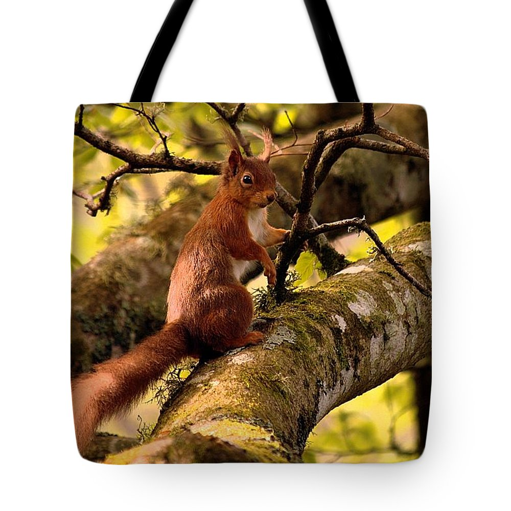 Red Squirrel Tote Bag featuring the photograph Red Squirrel by Gavin Macrae