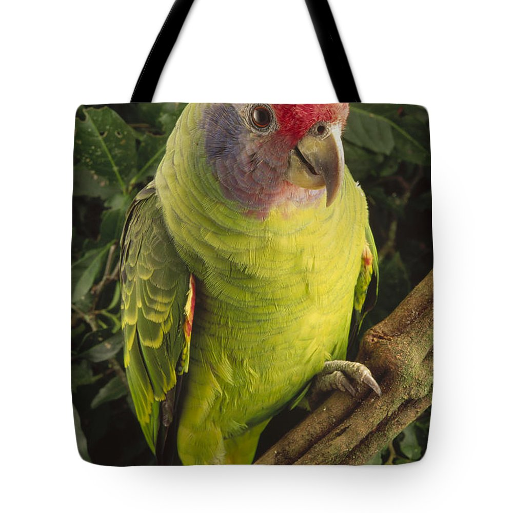 Mp Tote Bag featuring the photograph Red-tailed Amazon Amazona Brasiliensis by Claus Meyer