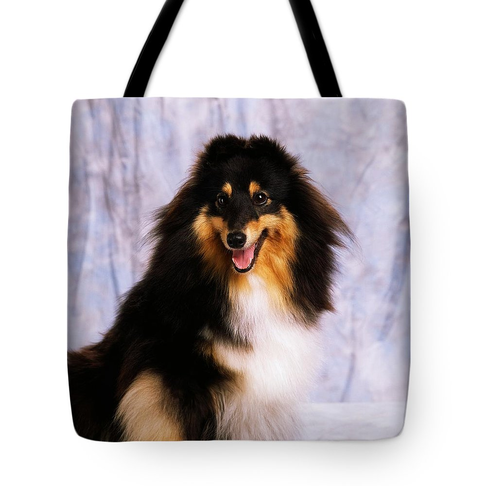 Color Tote Bag featuring the photograph Shetland Sheepdog Portrait Of A Dog by The Irish Image Collection
