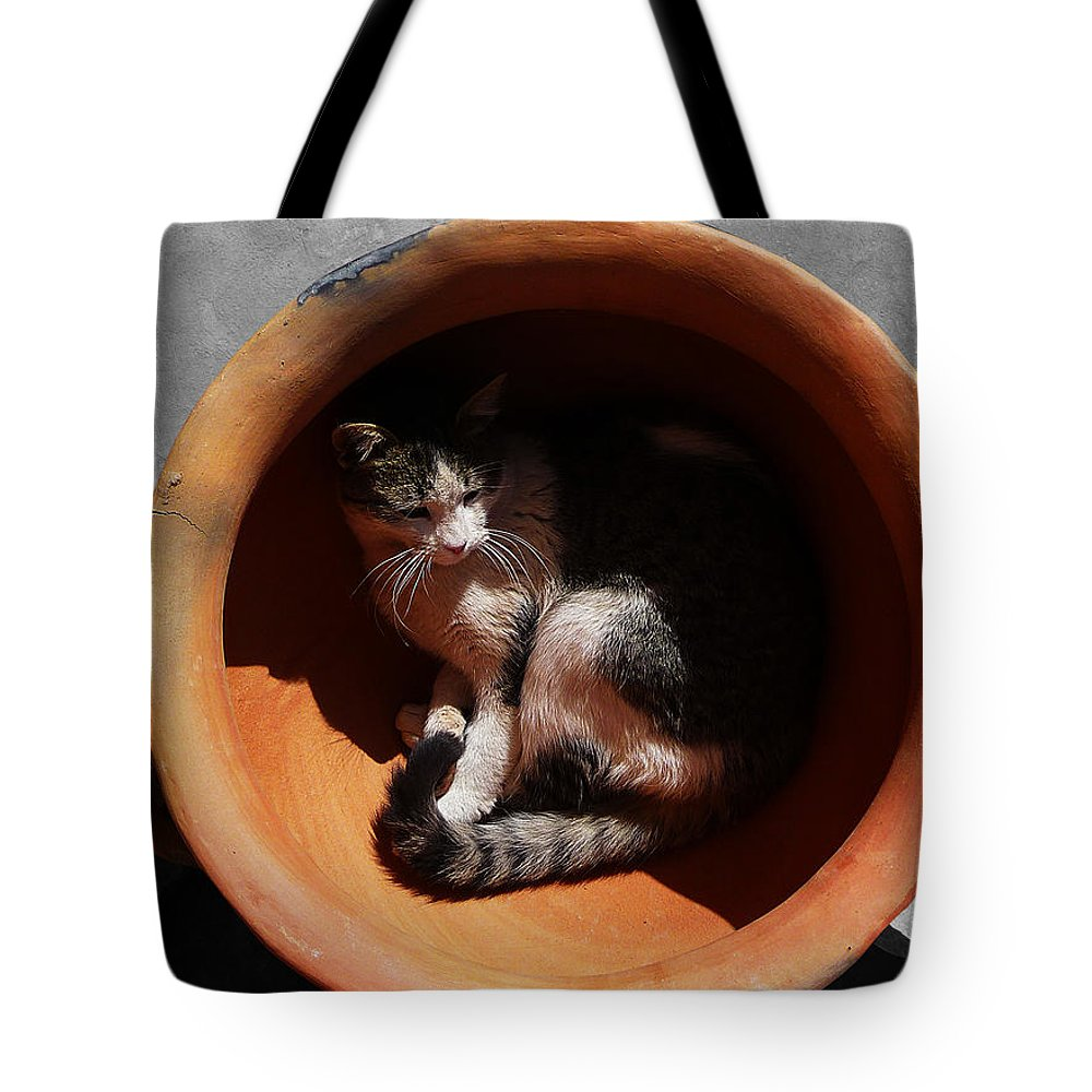 Cat Tote Bag featuring the photograph Siesta 3 by Xueling Zou