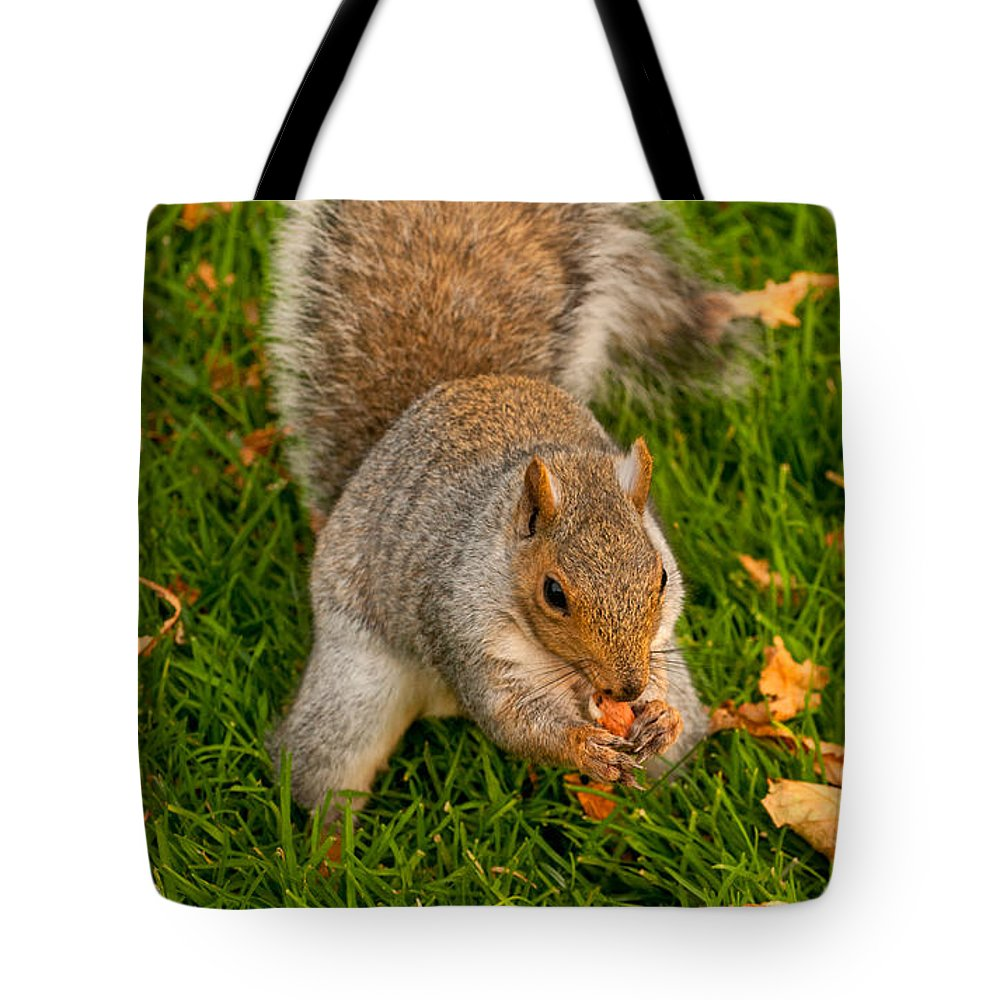 Squirrel Tote Bag featuring the photograph Snack Time by Paul Mangold