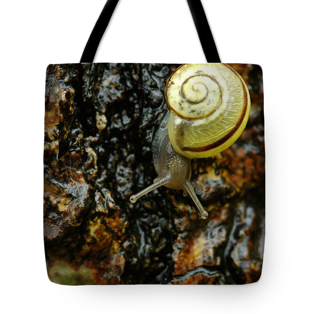 Barks Tote Bag featuring the photograph Snail, Pointe-des-cascades, Quebec by Steeve Marcoux