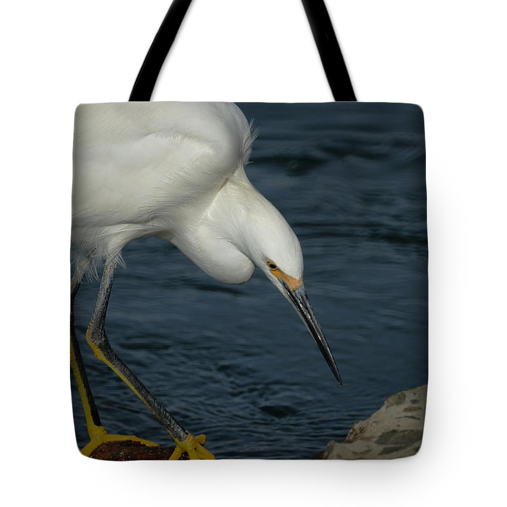 Snowy Egret Tote Bag featuring the photograph Snowy Egret 8 by Ernie Echols