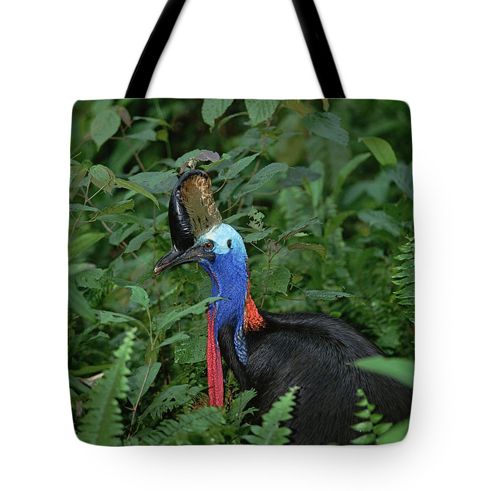 Mp Tote Bag featuring the photograph Southern Cassowary Casuarius Casuarius by Konrad Wothe