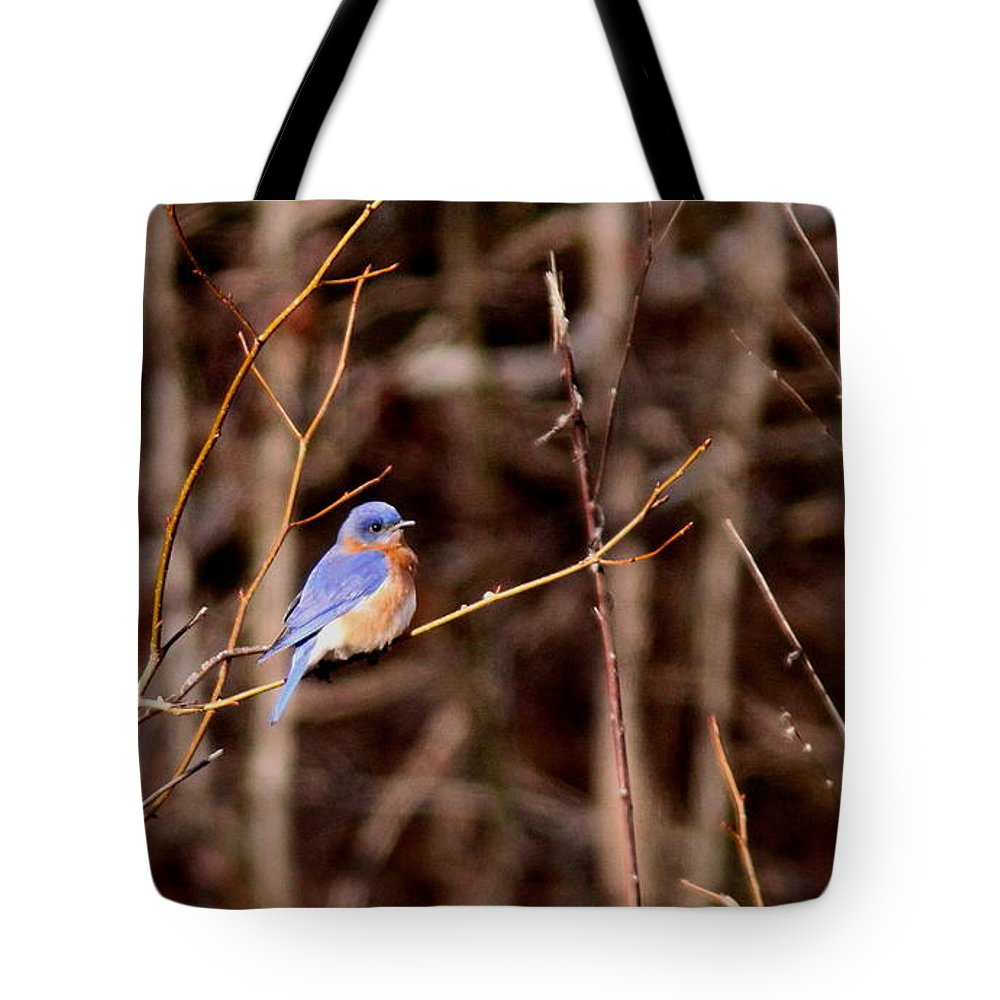Eastern Bluebird Tote Bag featuring the photograph Standout by Travis Truelove