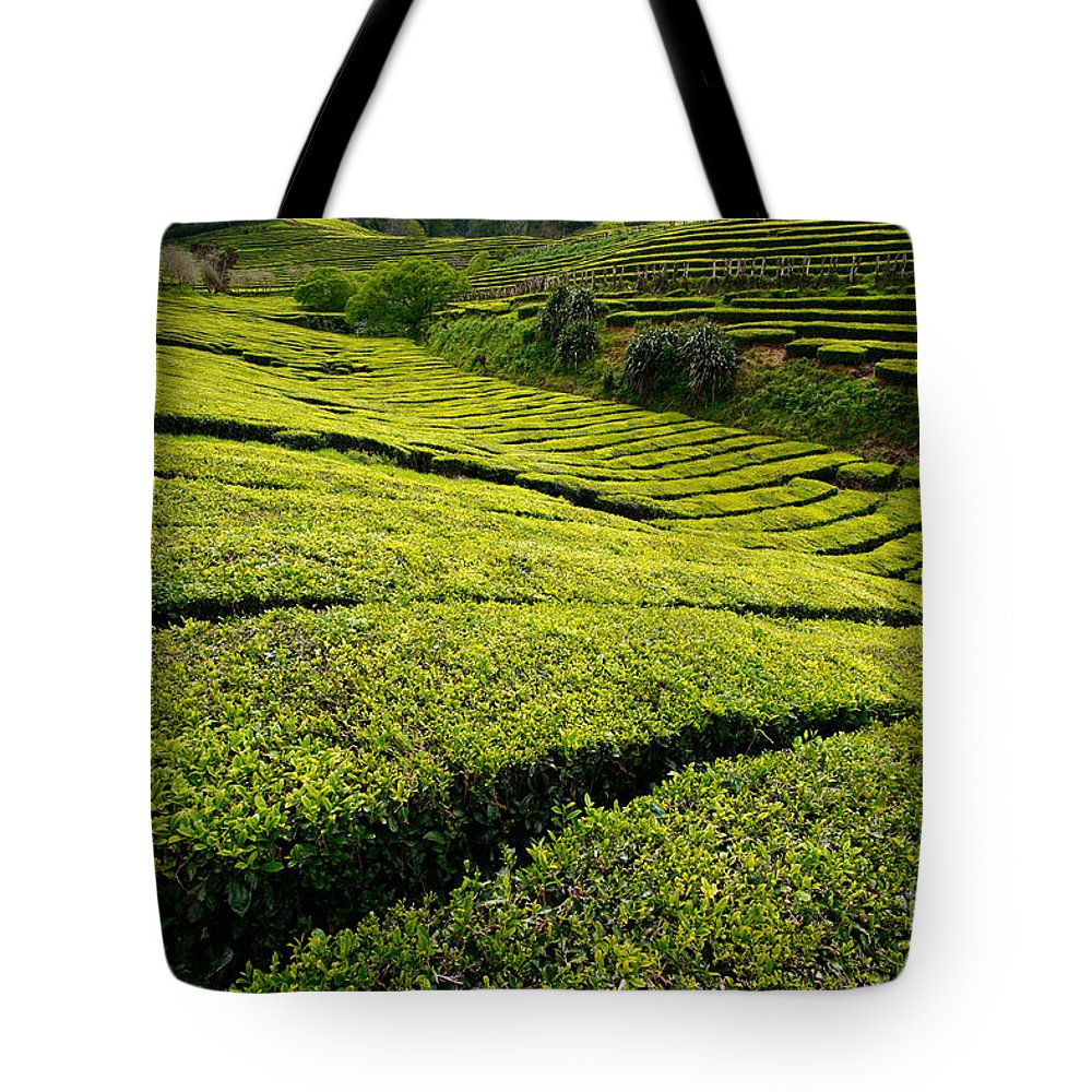 Tea Gardens Tote Bag featuring the photograph Tea Gardens by Gaspar Avila