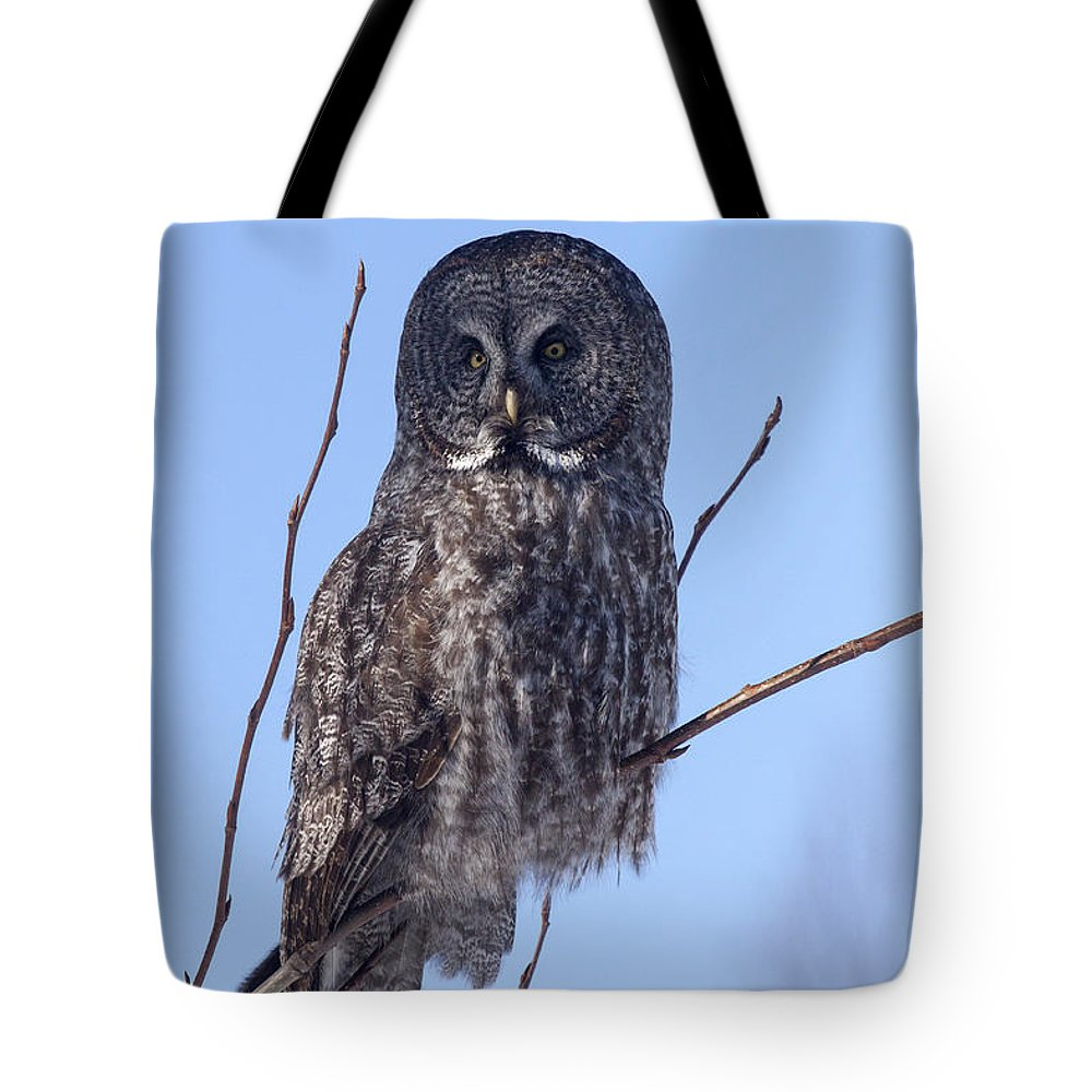Doug Lloyd Tote Bag featuring the photograph The Hunter by Doug Lloyd