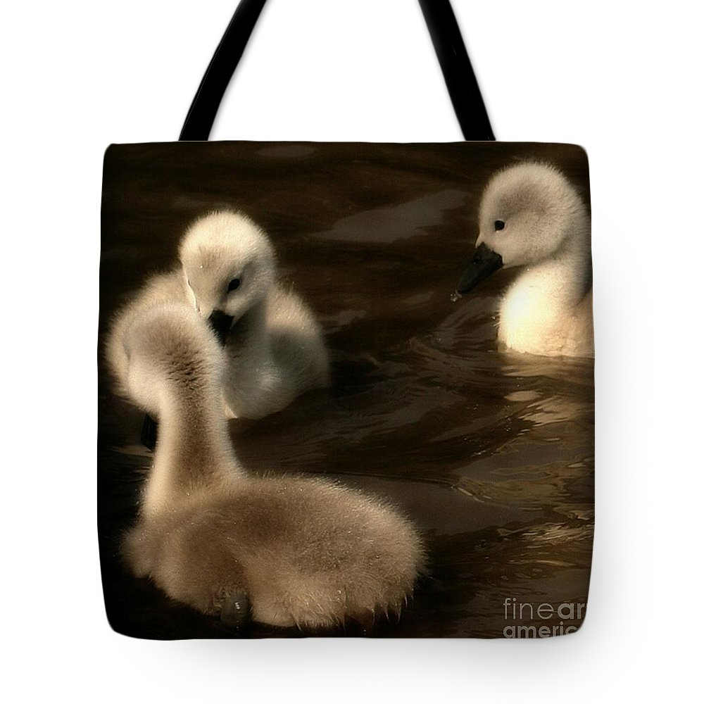 Cygnets Tote Bag featuring the photograph They Called You An Ugly What by YoursByShores Isabella Shores