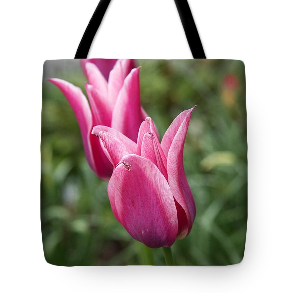 Tulips Tote Bag featuring the photograph Three Tulips by Christiane Schulze Art And Photography