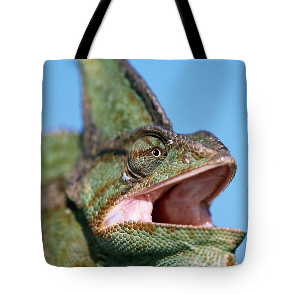 Fn Tote Bag featuring the photograph Veiled Chameleon Chamaeleo Calyptratus by Ingo Arndt