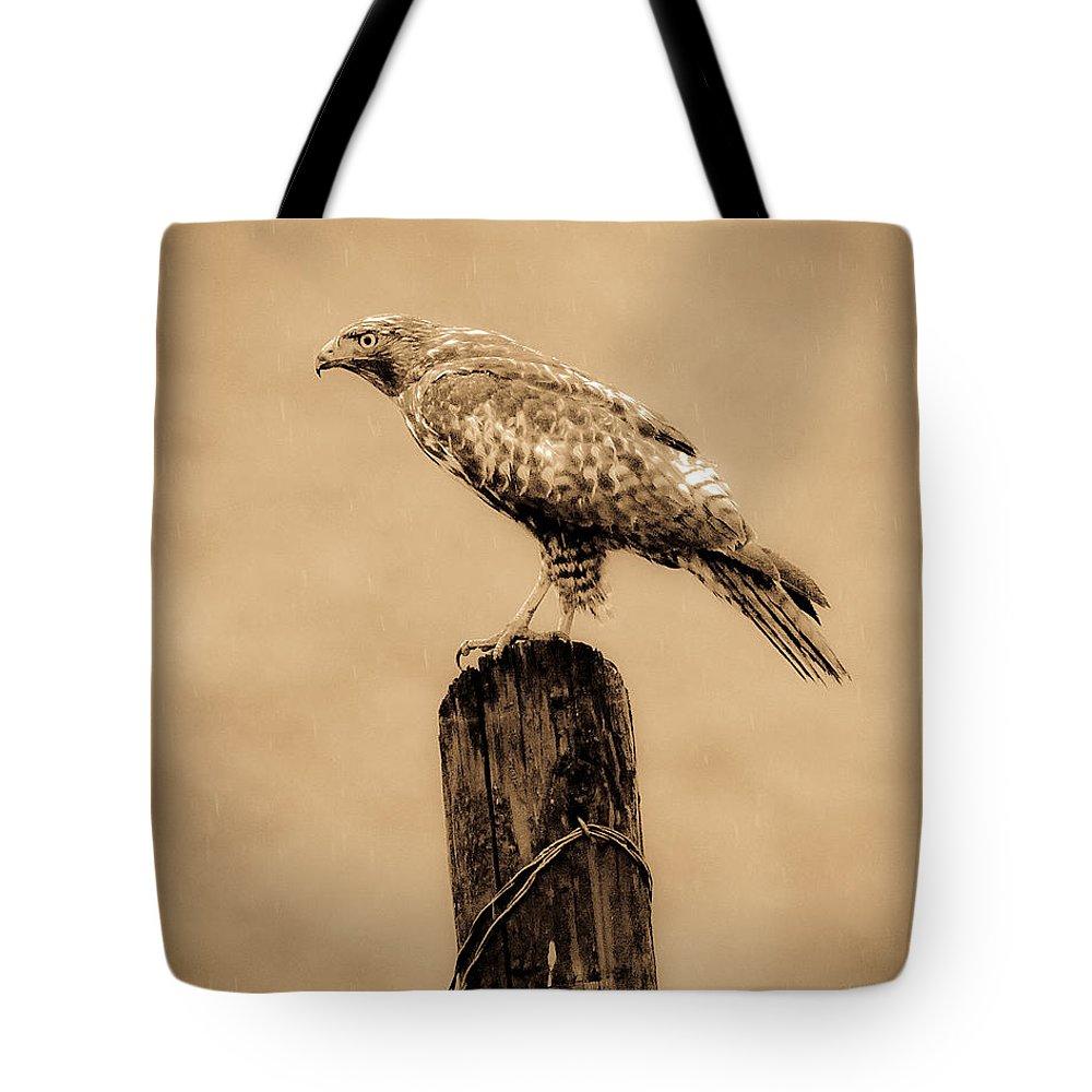 Redtail Hawk Tote Bag featuring the photograph Vintage Hawk by Steve McKinzie