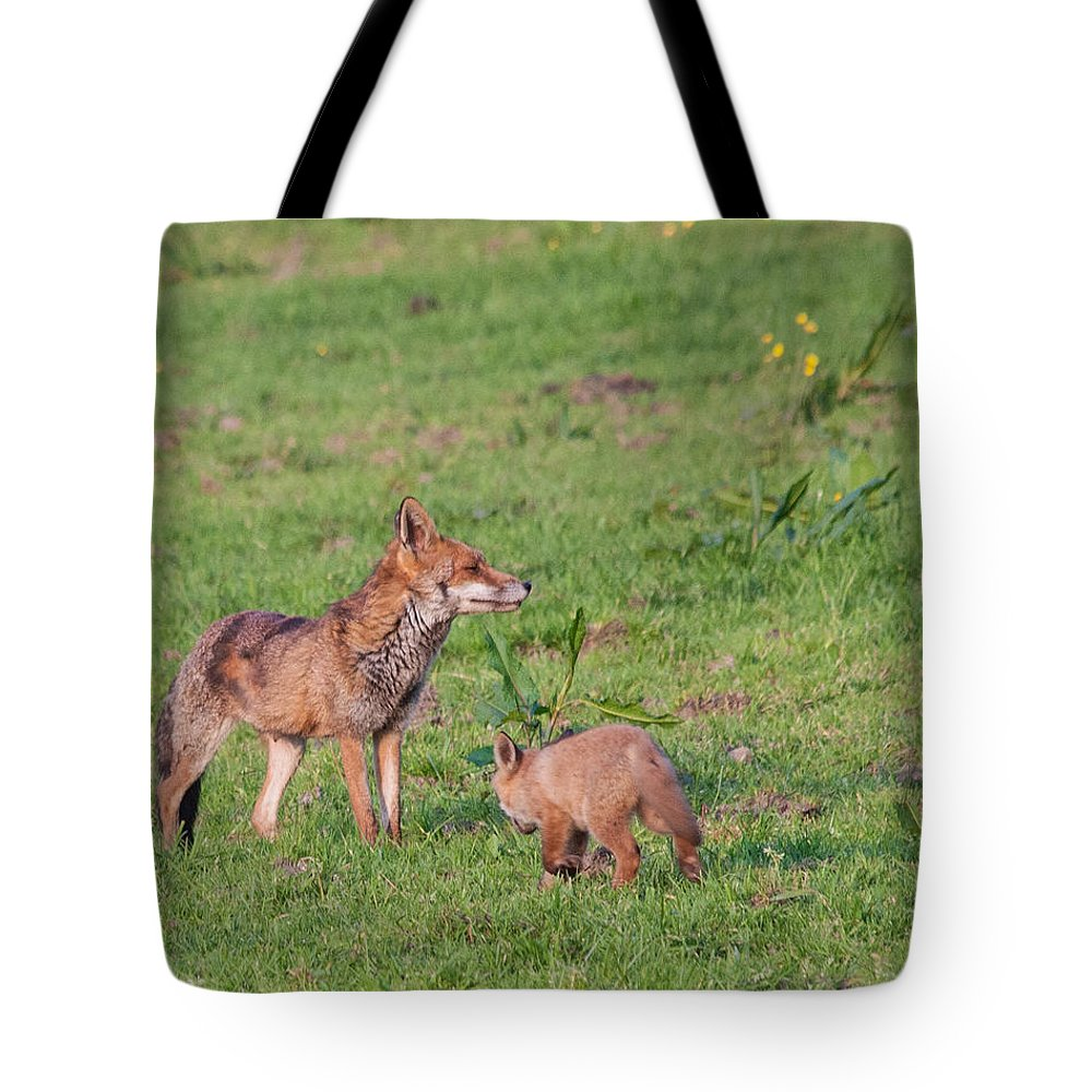 Dawn Oconnor Dawnoconnorphotos@gmail.com Tote Bag featuring the photograph Vixen And Cub by Dawn OConnor