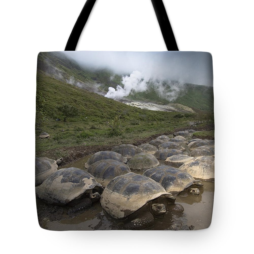 Mp Tote Bag featuring the photograph Volcan Alcedo Giant Tortoise Geochelone by Pete Oxford