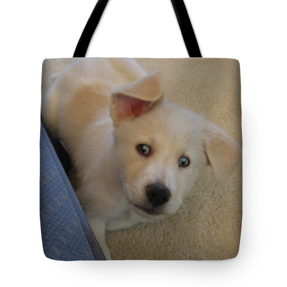 Tote Bag featuring the photograph What by Amy Hosp