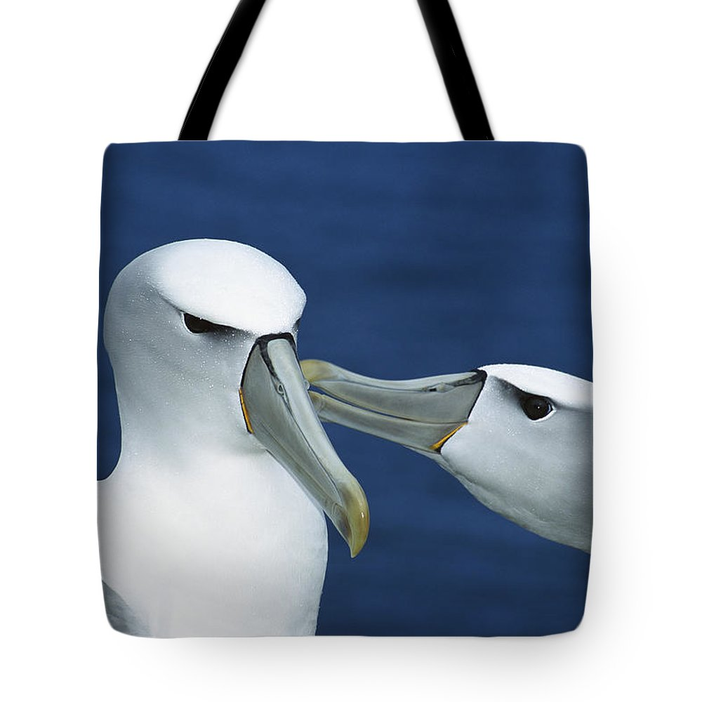 Mp Tote Bag featuring the photograph White-capped Albatross Thalassarche by Tui De Roy