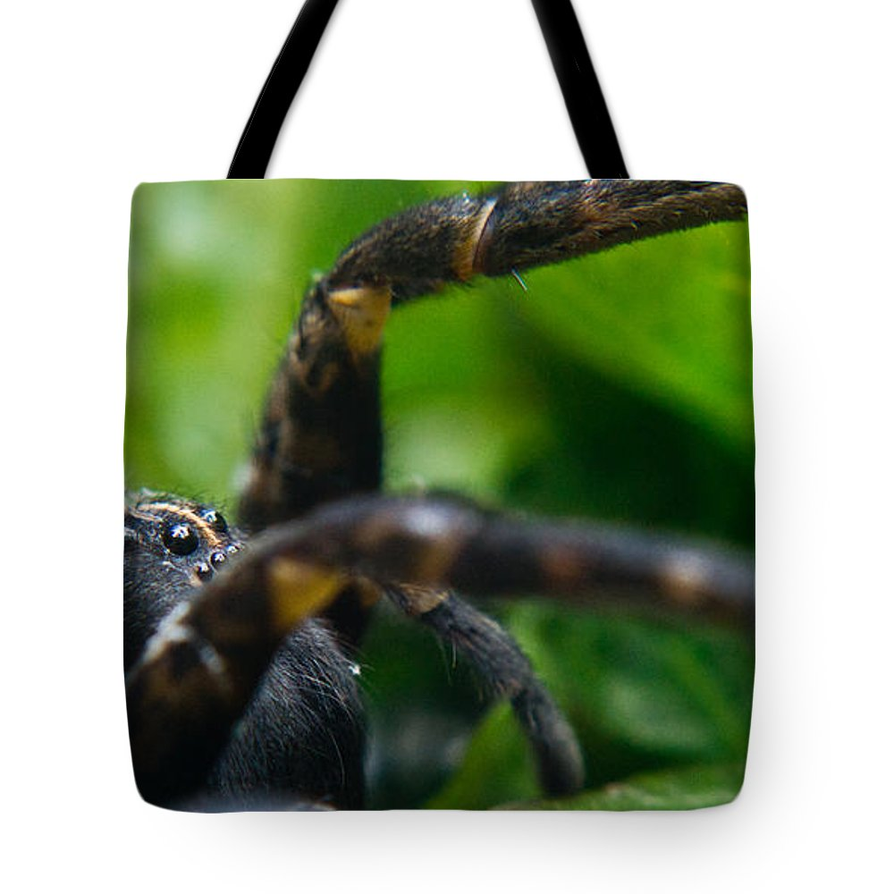 Wolf Tote Bag featuring the photograph Wolf Spider And Babies 2 by Douglas Barnett