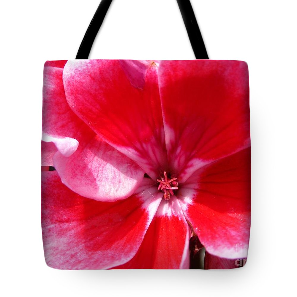 Zonal Geranium Tote Bag featuring the photograph Zonal Geranium Named Candy Fantasy Kiss by J McCombie