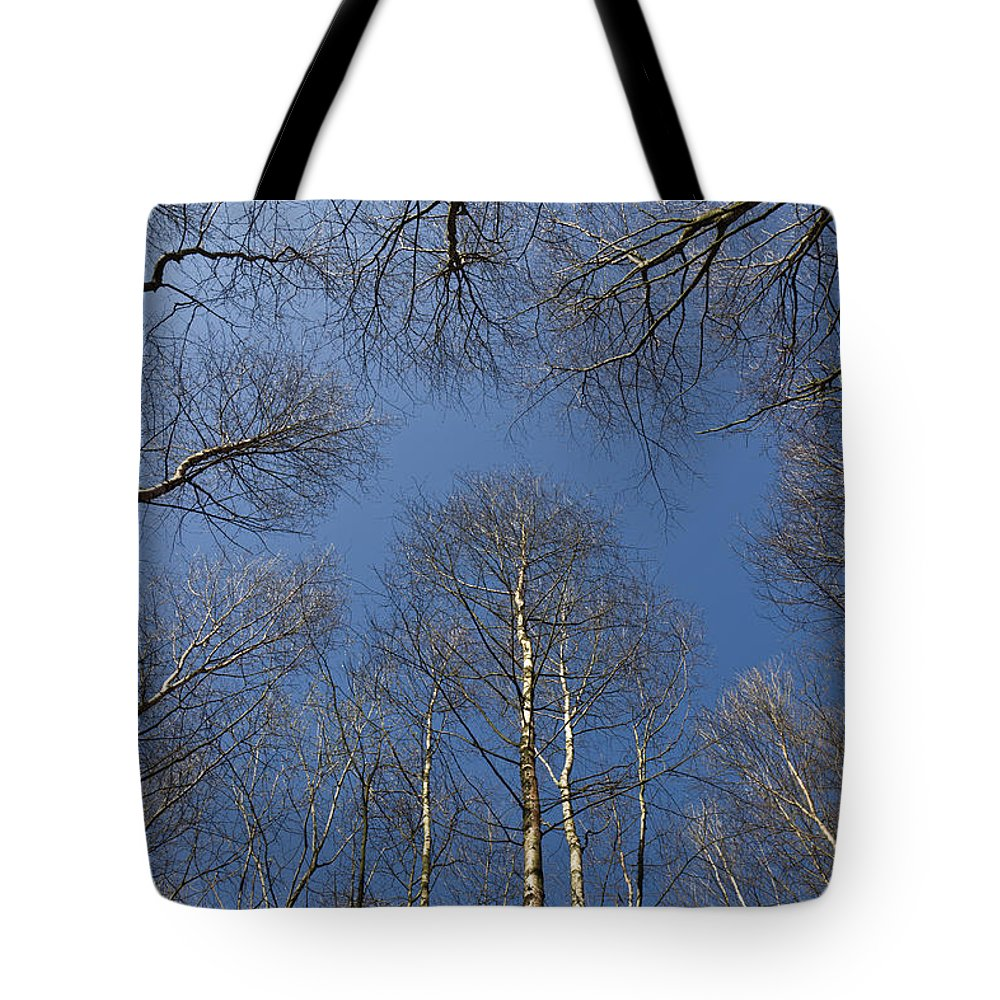 Tree Tote Bag featuring the photograph Trees In Epping Forest by David Pyatt