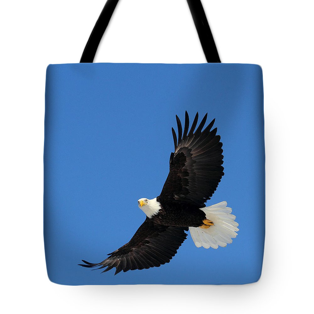 Doug Lloyd Tote Bag featuring the photograph American Bald Eagle by Doug Lloyd