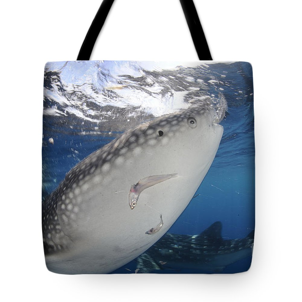 Day Tote Bag featuring the photograph Whale Shark Feeding Under Fishing by Steve Jones