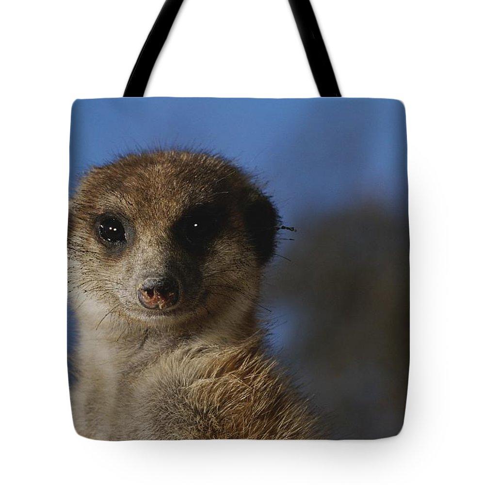 Animals Tote Bag featuring the photograph A Close View Of A Meerkat Suricata by Mattias Klum