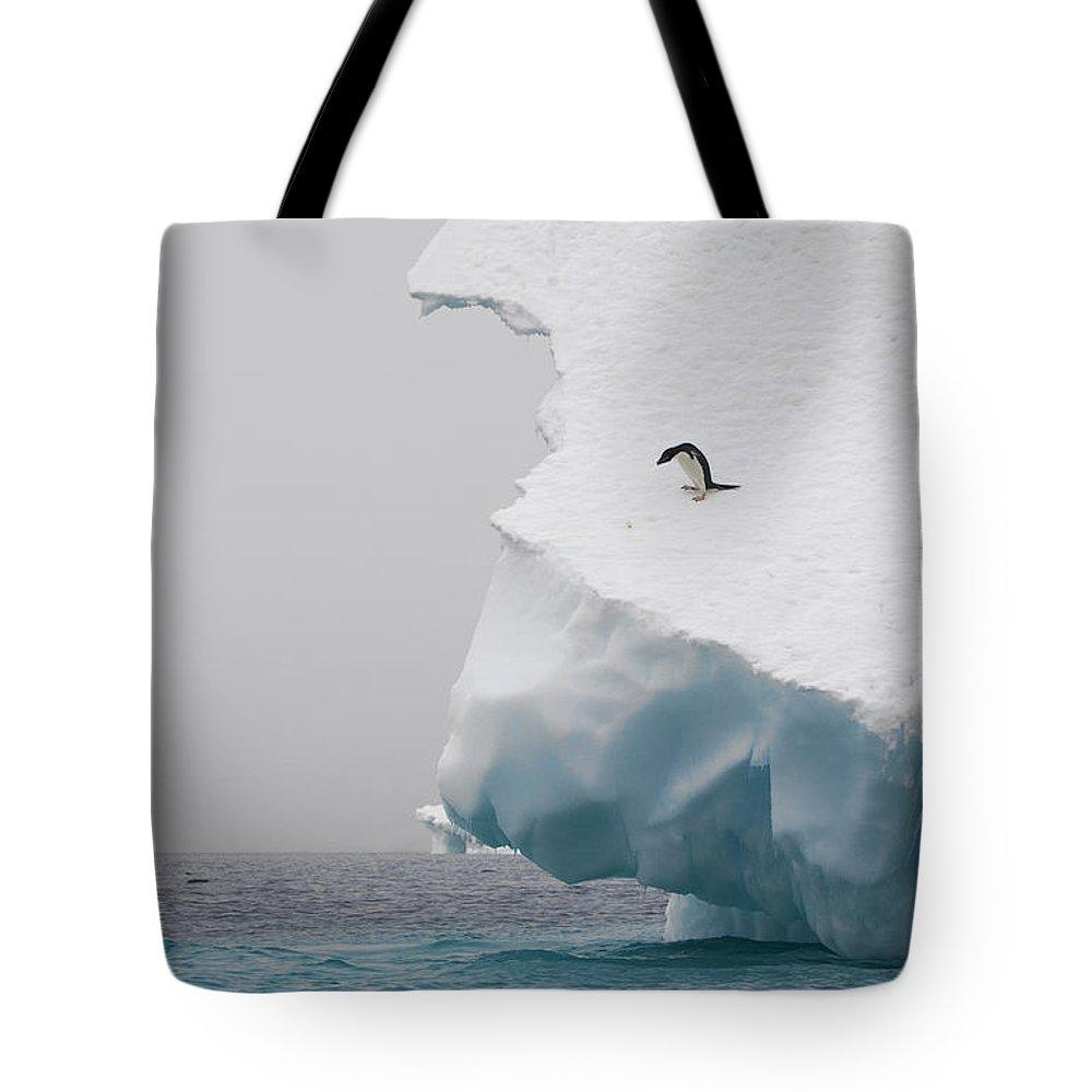 Mp Tote Bag featuring the photograph Adelie Penguin Pygoscelis Adeliae by Suzi Eszterhas
