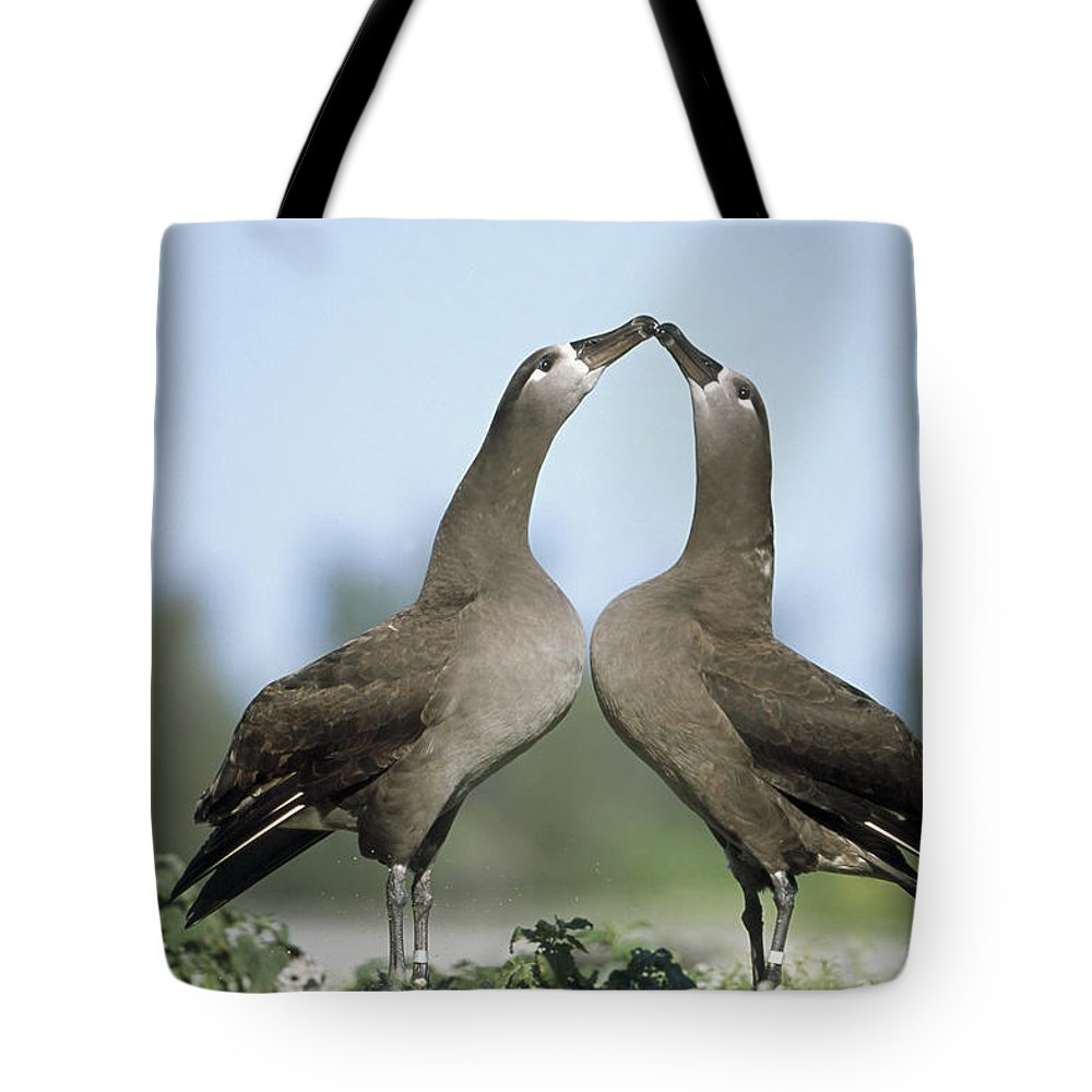 Affection Tote Bag featuring the photograph Black-footed Albatross Phoebastria by Tui De Roy