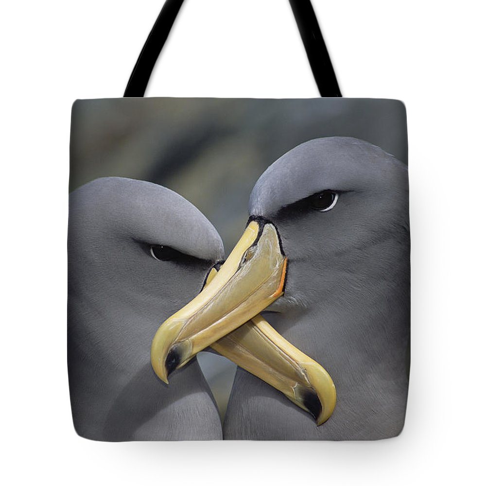 Affection Tote Bag featuring the photograph Chatham Albatross Thalassarche Eremita by Tui De Roy